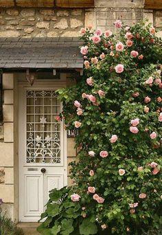 Door - climbing roses