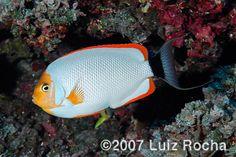 Five Of the Rarest Marine Aquarium Fish | Featured Creature