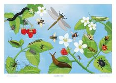 Insects & bugs poster  Illustrated by Ingebjørg Faugstad Mæland