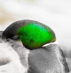 Foto: Schwarz-Weiß-Fotos, in denen bestimmte Details farbig hervorstechen. www.netzauge.de