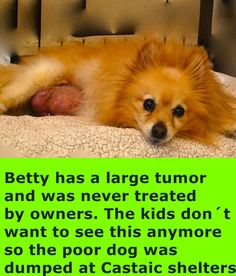 ADOPTED!!!---Dumped with massive tumor! Betsy was surrendered to Castaic Animal Care and Control yesterday because....... THE KIDS COULDN'T STAND LOOKING AT THE LUMP ANYMORE! So 14 year old Betsy, who was never spayed, sits at the shelter with a massive tumor plus several other smaller ones. We have no idea at this time if surgery is even possible due to her age and its size. All we know is she needs to get into a home...