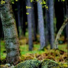 Photo Greeny! by Aziz  Nasuti Photo Arts on 500px