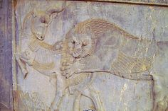 500 BCE, One of the bas-reliefs from the Palace of Forty Pillars in Persepolis, Iran. Here we have a fight between a lion and a bull with hooves and apparently one striped horn. For a long time scholars thought that the Unicorn myth came into being as a result of a misinterpretation of these carvings.