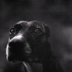 Keith Carter Photographs | Bones