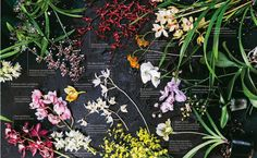 orchids-guide-HL-mag-2000