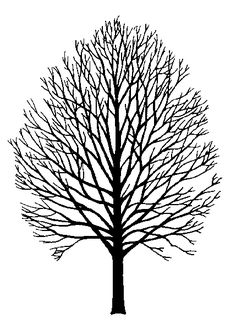 GR08_Acer_saccharum_silhouette.gif 429×600 pixels