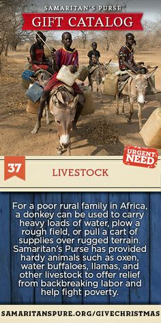Your gift can provide a donkey or other hard-working animal to a poor rural family