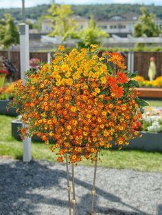 Modne balkonske zasaditve za leto 2016 - Zeleni svet Plants, Plant, Planets