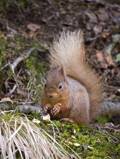 ea50553e06ea14 12313 Best Squirrel....!!! images in 2019