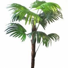This artificial Chusan Palm Tree (Trachycarpus fortunei) measures 91cm (3ft) from top to bottom inclusive of the stem and has removable leaves making them easy to clean/rinse!  It is ideal for indoor use and is perfect for tropical plant displays and perfect as an office plant...no maintenance or watering required! Indoor Palms, Office Plants, Cherry Tree, Tropical Plants, Artificial Plants, Tree Branches, Palm Trees, House Plants, Plant Leaves
