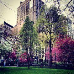 NYC. Madison square park
