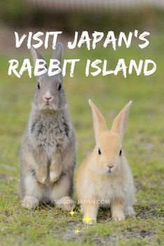 Okunoshima Island - All our travel tips to visit this island full of cute rabbits in Japan! Dublin Travel, Asia Travel, Japan Travel, Travel Tips, Minivan, European Road Trip, European Travel, Japan With Kids, Spain Road Trip
