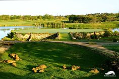Don't be distracted by the gorgeous setting!  For reservations, please call 787.609.5888 #RoyalIsabela #PR #Luxury #Golf
