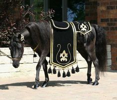 Arabian Costumes for Horses | Eclipse in Arabian costume... notice the high set tail above, the ...
