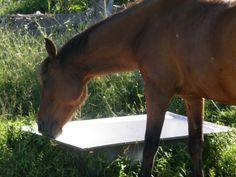 cheval- Celui du voisin.