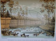 Victorian (and earlier) Duck Decoys | Featured Books : Stella & Rose's Books