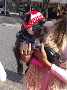 DOG Beanie Velcro onBeard to Adjust DogCat by DWedgeCreations