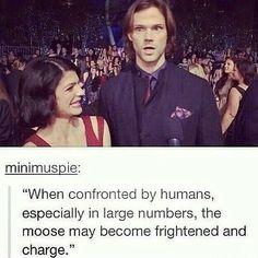 Oh Jared