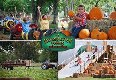 Pumpkins and Fall Fun: Blessington Farms Opens September 27 + Giveaway (Houston Texas area)