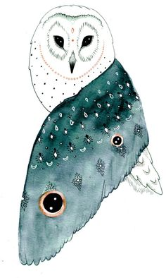 'Barn Owl' by Hannah Wilson More