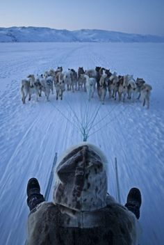 l0stship:Dog sled driving in North Greenland (Visit Greenland)   :-)