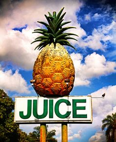 You know you're headed in the right direction when you see a pineapple juice sign! Website Design, Web Design, Logo Design, Kitsch, Summer Fun, Summer Time, Roadside Attractions, Arte Pop, Look At You