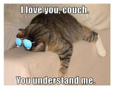 """i love you COUCH you understand mew"" by catsarethebestcamryn ❤ liked on Polyvore"