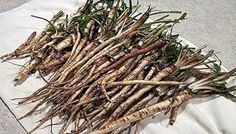 САМОЕ ИНТЕРЕСНОЕ В СЕТИ!: В 100 раз эффективнее химиотерапии: трава, которая...