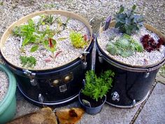 unusual flower pots - Ixquick Picture Search
