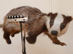 Badgermin. It's a badger crossed with a Theremin --- https://www.pinterest.com/lardyfatboy/