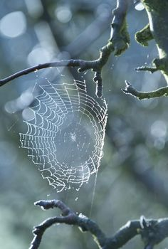 I am always amazed that such a little creature, as a spider, can create beautiful works of art.--- Photography by Alan Benson Macro Fotografie, Spider Art, Spider Webs, Spider Silk, Image Nature, French Blue, Fauna, Amazing Nature, Graphic