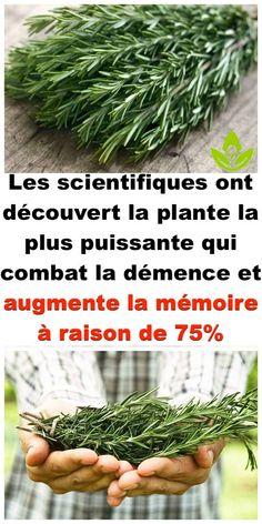 Les scientifiques ont découvert la plante la plus puissante qui combat la démence et augmente la mémoire à raison de 75%