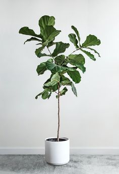 House Plants Decor, Plant Decor, Plant Aesthetic, Modern Planters, Decoration Design, Diy Home Crafts, Flowers Nature, Green Plants, Indoor Plants