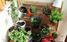 Urban Gardening: Kreative Ideen für den Gemüseanbau auf deinem Balkon