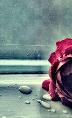 Sevmek; Bazen, umutların kayıp giderken ellerinden, Son gayretle yinede yakalamak ucundan Ve affetmek geçmişi… Affetmek geleceği… Devamı www.stressyado.co...