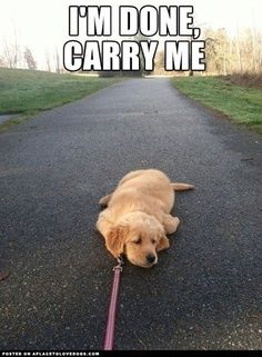 Golden Retriever Puppy knows his limit.– this is exactly like my German Shepard puppy EMILY, I COULDN'T HELP IT, LOL !!!!! I SAW THIS AND THOUGHT OF LAYLA !!!!!!! :) | best stuff