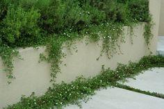 ヒメイワダレソウ 今はこんな感じ | My favorite garden Moss Garden, Garden Images, Garden Inspiration, Entrance, Herbs, Exterior, Landscape, Parking Space, Parking Lot