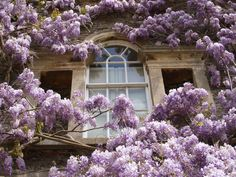 Wisteria, Archway Bedroom Window