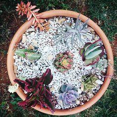 Detalhe do vaso de suculentas! Muitas delas quando no sol ficam coloridas!!! #paisagismo #arquiteto #arquitetura #projeto #plantasornamentais #suculentas #vaso #jardim #picoftheday #thatsdarling #exploreinbetween #decor #detalhes #details #landscape #paulariosarq