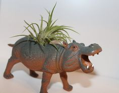 Hippo with Air Plant