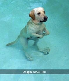 If you like funny dog memes, you've come to the right internet location. These are the 100 funniest dog memes of all time. Funny Animal Jokes, Funny Dog Memes, Dog Funnies, Dinosaur Funny, Pet Memes, Cute Funny Dogs, Cute Funny Animals, Cute Animal Pictures, Funny Animal Pictures