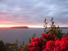 As the sun sets over the water, the air is drenched with the nuances of honeysuckles mixed with other florals, roses plus pines and the waves softly blend the deep water scents combined.