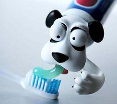 dentifricio, dispenser, cane, vomito, spazzolino, bambini, foto strane e bastarde