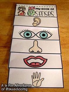 five senses flip book Five Senses Preschool, 5 Senses Activities, My Five Senses, Preschool Age, Science Activities For Kids, Preschool Books, Preschool Worksheets, Preschool Learning, Halloween Activities For Kids