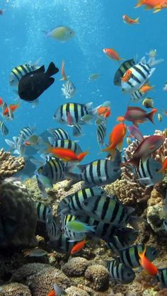 Reef, Fish, Color, Sea, Animal - Blow bubble and look at the fish!