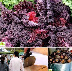 market photos 8/6/14  https://www.facebook.com/media/set/?set=a.718231694902904.1073741841.113836995342380&type=3