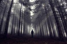 Fotograf Foggy forest von Sinan Cansız auf 500px