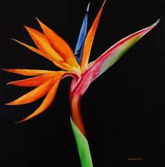Original Floral Painting by Tetiana Laptieva Bird Of Paradise Tattoo, Birds Of Paradise Flower, Paradise Painting, Plant Painting, Paint And Sip, Architecture Tattoo, Flower Doodles, Zen Art, Conceptual Art