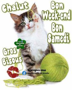 Bon Weekend, Week End, Album, Cats, Animals, Facebook, Quotes, Buen Dia, Bom Dia