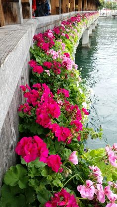 See 4 photos from 17 visitors to Luzern. 4 Photos, Floral Wreath, Wreaths, Travel, Decor, Lucerne, Voyage, Decoration, Decorating